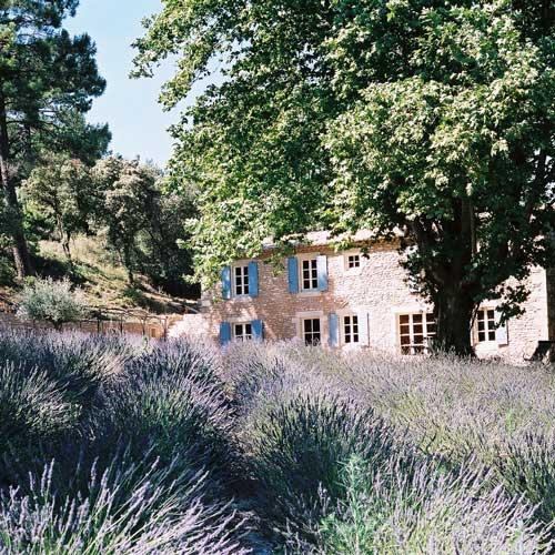 Création du site internet du Domaine de Saint Paulet, producteur récoltant de truffes noires dans la Drôme